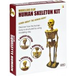 C-MODEL CLAY KIT HUMAN SKELETON