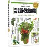 图解家庭养花和阳台种菜(全彩图解典藏版)