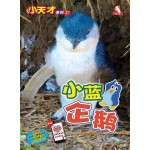 小天才27-小蓝企鹅