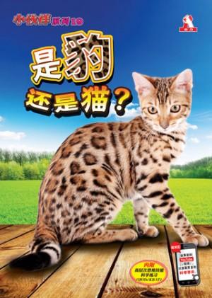 小伙伴19-是豹还是猫?