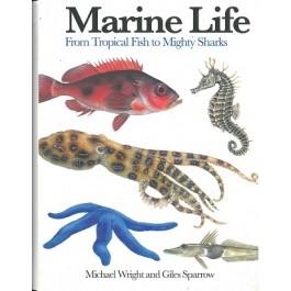 Mini Encyclopedia: Marine Life